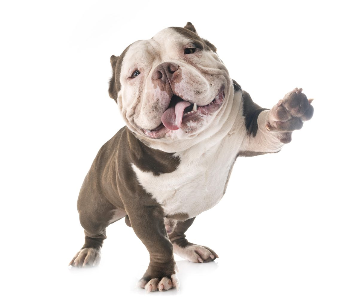 Access here alternative investment news about These Dogs Of The Dow Deliver 5.3%-6.3% Income