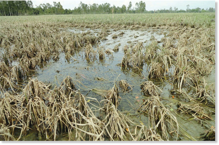 Access here alternative investment news about Prolonged Flood Will Push Up Vegetable Prices In Bangladesh Further - 260,000 Hectares Of Farmland Damaged -- Earth Changes -