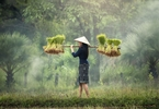 Access here alternative investment news about SE Asia's Frontier Markets Poised For Private Equity Growth