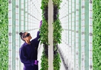 insiders-raise-questions-about-softbank-backed-farming-startup-plenty