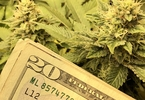 why-traditional-vcs-dont-invest-in-cannabis-companies-and-who-will