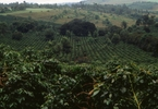 Access here alternative investment news about Tanzania: Revealed - Why Coffee Prices Are Tumbling Sharply
