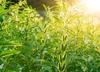 Equinom Raises $10M For Non-gmo Seed Breeding Technology