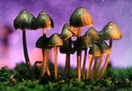 Access here alternative investment news about Psychedelics For Mental Health: Atai Research And Funding