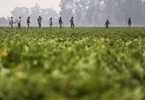 Access here alternative investment news about Agritech Startup Dehaat Raises $12M To Reach More Farmers In India - Techcrunch