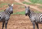 Access here alternative investment news about Insurtech: Austin's The Zebra, An Insurance Comparison Tool Provider, Secures $150M Via Series D, Achieves Unicorn Status