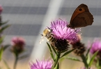 Access here alternative investment news about Ten Ways To Ensure Bees Benefit From The Solar Power Boom