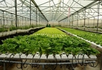vietnams-hi-tech-agriculture-rides-strong-wave-of-investment