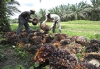 Access here alternative investment news about Demand For Malaysian Palm Oil Set To Rebound