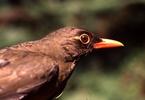 targeted-forest-regeneration-a-blueprint-for-conserving-tropical-biological-diversity