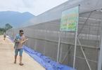 Access here alternative investment news about Danang Urges Investors To Develop Six Hi-tech Agriculture Projects - News Vietnamnet