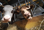 vegan-electricity-company-offers-green-alternative-to-energy-made-from-animal-byproducts