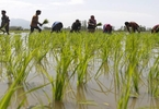 Access here alternative investment news about Hopeful Of Agri Exports Crossing $40B By Year-end, Says Agriculture Secretary