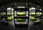 skyscraper-farms-are-about-to-go-global