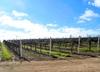 Harvard University Investing In California Vineyard Water Rights