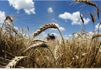 what-sanctions-russias-agricultural-exports-booming-expected-to-hit-25b-this-year-societys-child-