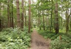 india-to-spend-6b-to-create-new-forests